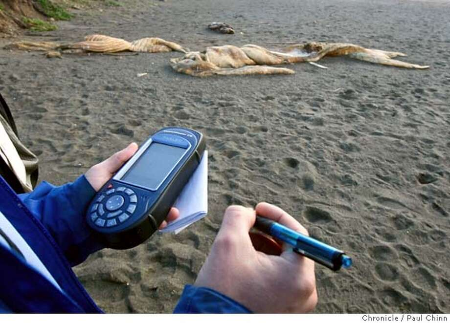 Sean Stasio, from San Francisco's Recreation and Parks Department, uses a GPS receiver to record the precise coordinates of a whale carcass, background, on the beach across from Sharp Park Golf Course in Pacifica, Calif. on Wednesday, Jan. 30, 2008. A dispute has arisen between the city of Pacifica and San Francisco, which owns the golf course, as to who should be responsible for disposing of the rotting flesh which, residents say, has been there for several months. Photo: PAUL CHINN
