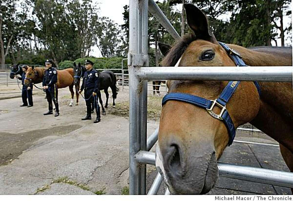 """As three new horses are introduced into the Mounted Unit of the San Francsico Police, """"Kenny"""" (right) is being retired after 12 years of service in the department. A ceremony was held to honor two horses, """"Kenny"""" and """"Chip"""" for their service at the Mounted Unit stables in Golden Gate Park, San Francisco, Calif. on Tuesday June 15, 2009. The three new horse are (left to Right) Matt Murphy with """"Bubba"""", Officer Steve Marquez, with """"Shorty"""" and Officer Jeff Roth, with """"Gunny"""","""