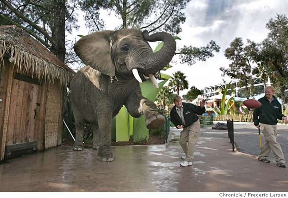"""Tava, a left-footed elephant kicker, assisted by Steve Johnson (trainer, just right of animal) the holder, kicked a football through the up-rights for a score at """"Six Flags Discovery Kingdom."""" With a talent for kicking balls, Tava, a 29-year-old female African elephant, predicted her choice that the New England Patriots will win by at least a field goal (3 points) over the New York Giants this Sunday at Super Bowl XLII.  Frederic Larson / Photo taken on 2/1/08, in Vallejo, CA, USA MANDATORY CREDIT FOR PHOTOG AND SAN FRANCISCO CHRONICLE/NO SALES-MAGS OUT Photo: Frederic Larson"""