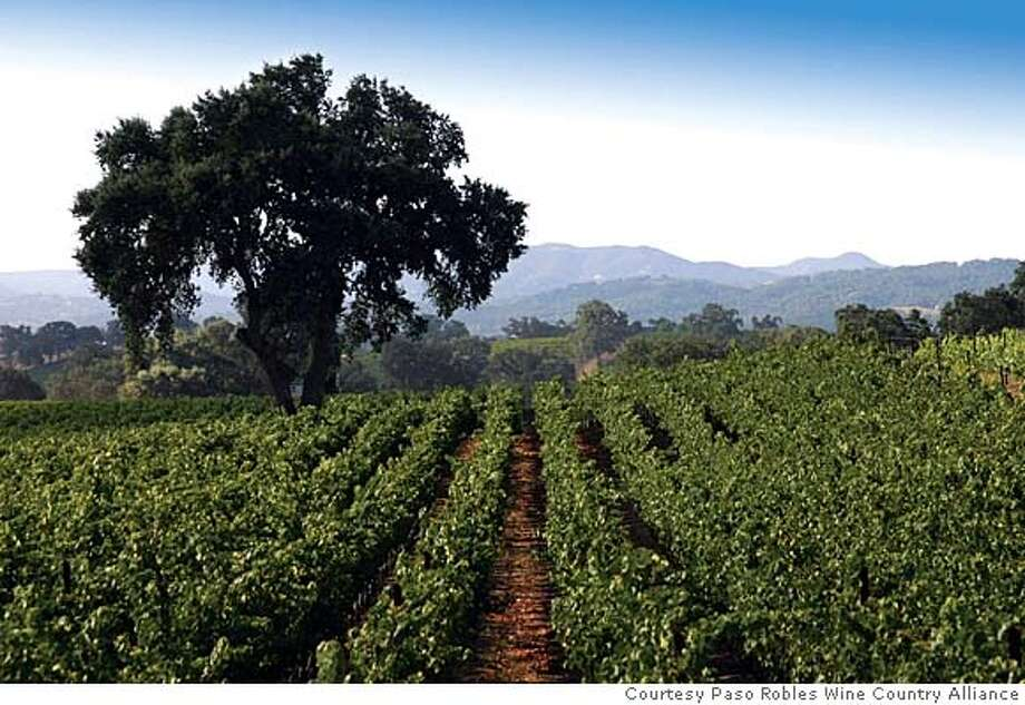 TRAVEL PASO ROBLES -- Vineyards are a common sight around Paso Robles. Photo courtesy Paso Robles Wine Country Alliance Photo: HO