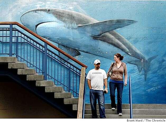 Nonprofit To Buy Aquarium At Pier 39 Sfgate