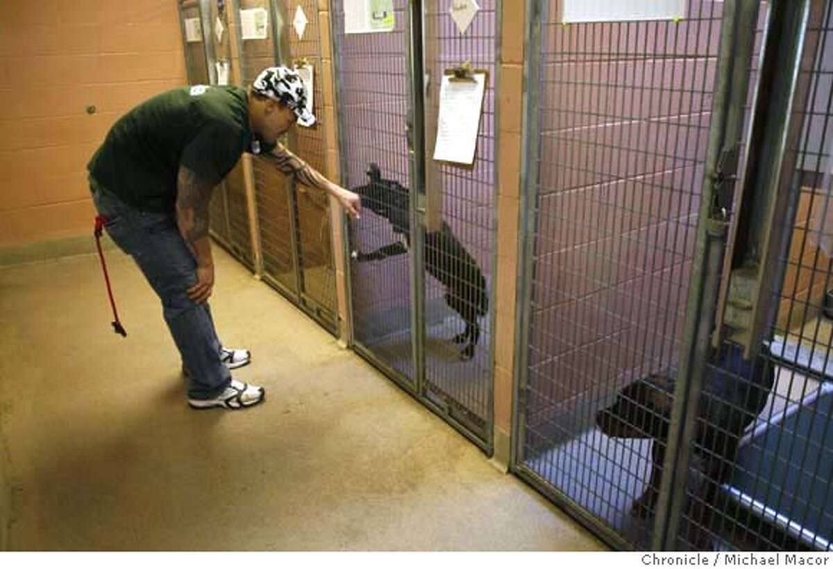 cooper_223_mac.jpg Cooper stops for a visit with one of the shelter dogs. Jarrod Cooper, a special teams player for the Oakland Raiders has started a foundation,