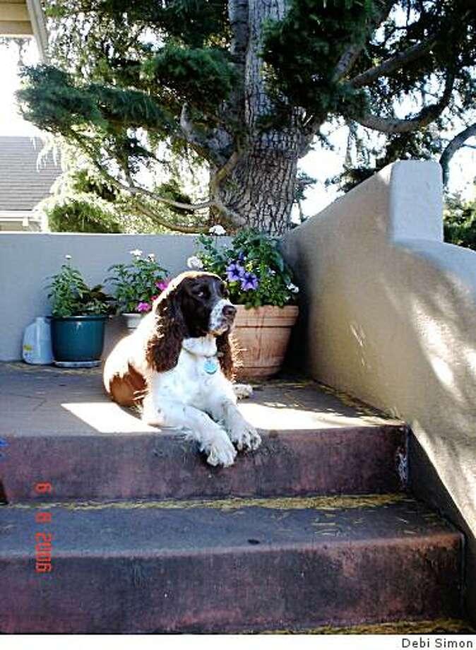 Bosco Photo: Debi Simon
