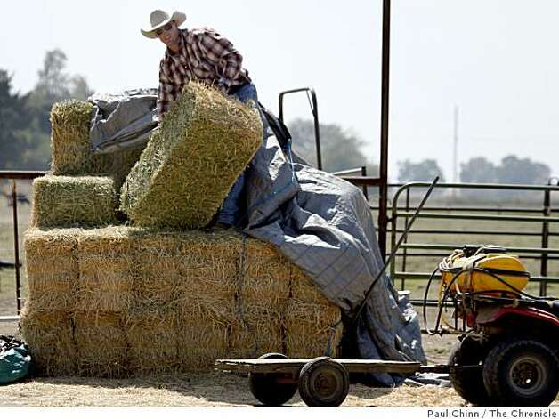 San Francisco 49ers draft pick Bear Pascoe loads hay bales on his family's cattle ranch in Terra Bella, Calif., on Thursday, May 14, 2009. Photo: Paul Chinn, The Chronicle