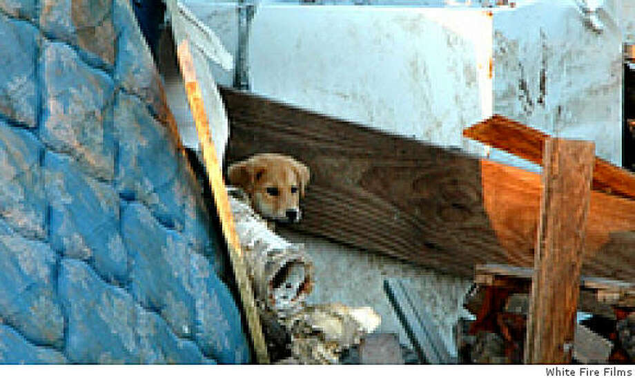 """A scene from the documentary """"MINE,"""" about pets abandoned when New Orleans was evacuated before Hurricane Katrina. Photo: White Fire Films"""