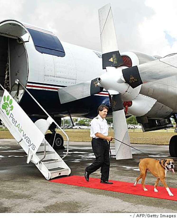 This recent undated handout photograph obtained May 6, 2009 from Pet Airways shows a pilot walking with a pet dog after stepping off a Pet Airways flight. Move over Jet Set -- here comes the Pet Set, as Pet Airways prepares to launch the first pet-only airline specifically designed for the safe and comfortable transportation of pets, with the first pet flights scheduled for July 14, 2009. On Pet Airways, all pets will travel in the main cabin, not in the cargo hold. Photo: -, AFP/Getty Images