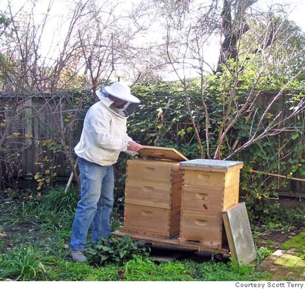 backyard beekeeper finds the sweet spot sfgate