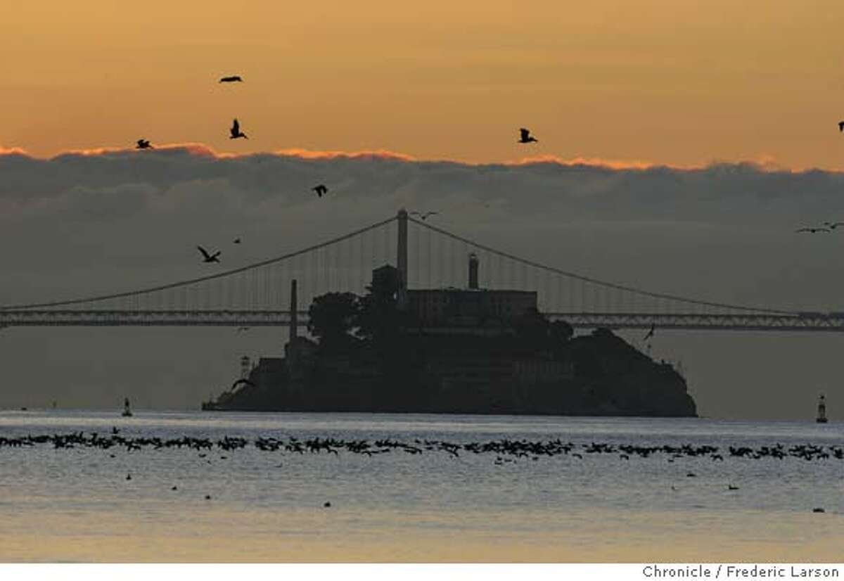 Thousands of birds feed off the bay as the sun was rising over Alcatraz Island. Frederic Larson / The Chronicle Photo taken on 12/30/07, in Sausalito, CA, USA MANDATORY CREDIT FOR PHOTOG AND SAN FRANCISCO CHRONICLE/NO SALES-MAGS OUT