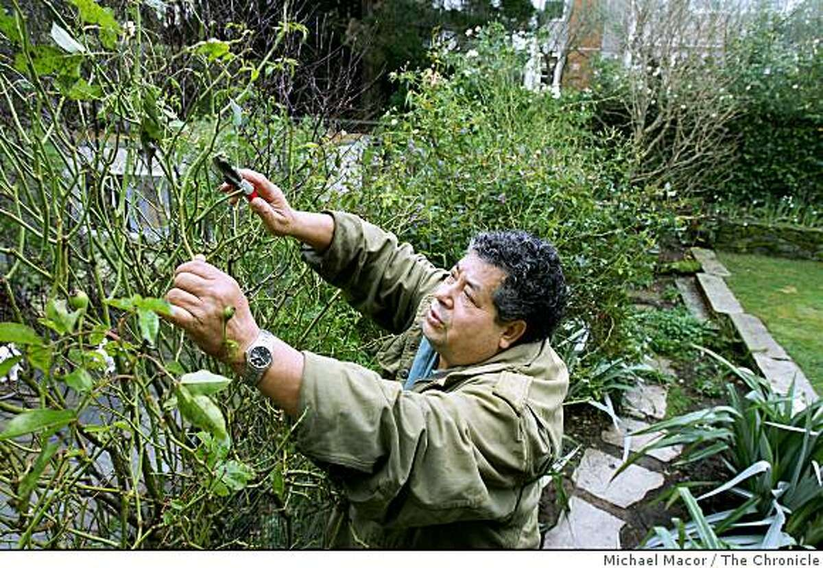 gardener09_100_mac.jpg Tapia trimming plants for a client in San Francisco. Redwood City immigrant gardener , Catalino Tapia, has started a scholarship to raise funds for immigrant college students. Raising more than $100,000 since we wrote about him. He has now raised enough to put his foundation on solid footing but will be talking with experienced foundation officials to take the project to the next level. *Catalino Tapia Michael Macor / The Chronicle Taken on 1/9/08, in San Francisco, CA, USA