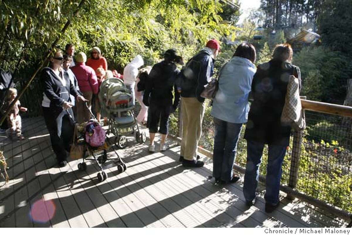 The Oakland Zoo's tiger enclosure was a popular place today, December 26, 2007 for curious visitors in light of Tuesday's mauling at the San Francisco Zoo. The Oakland Zoo has two tigers in captivity, a bengal and a bengal/siberian mix - both females. Photo by Michael Maloney / San Francisco Chronicle MANDATORY CREDIT FOR PHOTOG AND SF CHRONICLE/NO SALES-MAGS OUT