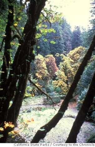 Undated handout image of Del Norte Coast Redwoods State Park in Del Norte County. California State Parks, 2008 / Courtesy to The Chronicle Photo: California State Parks, 2008