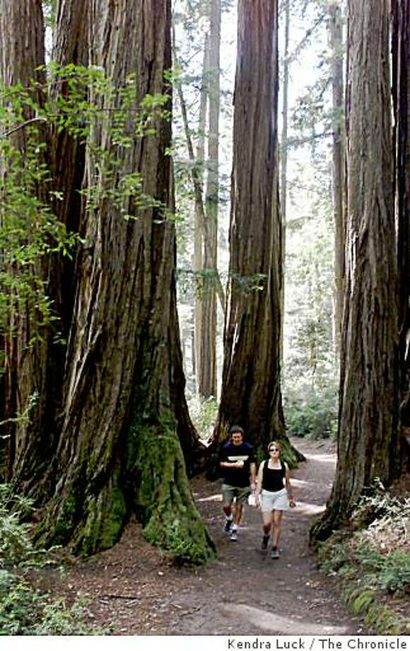 REDWOODS 1-C-19MAY00-PZ-KL ---John Brady and Sarah Kennel both of Oakland hike through the redwoods in Big Basin State Park. The Sempirvirens Club is celebrating it's 100th anniversary this weekend, the Club was founded to preserve California's coast redwoods. Photo: Kendra Luck, The Chronicle