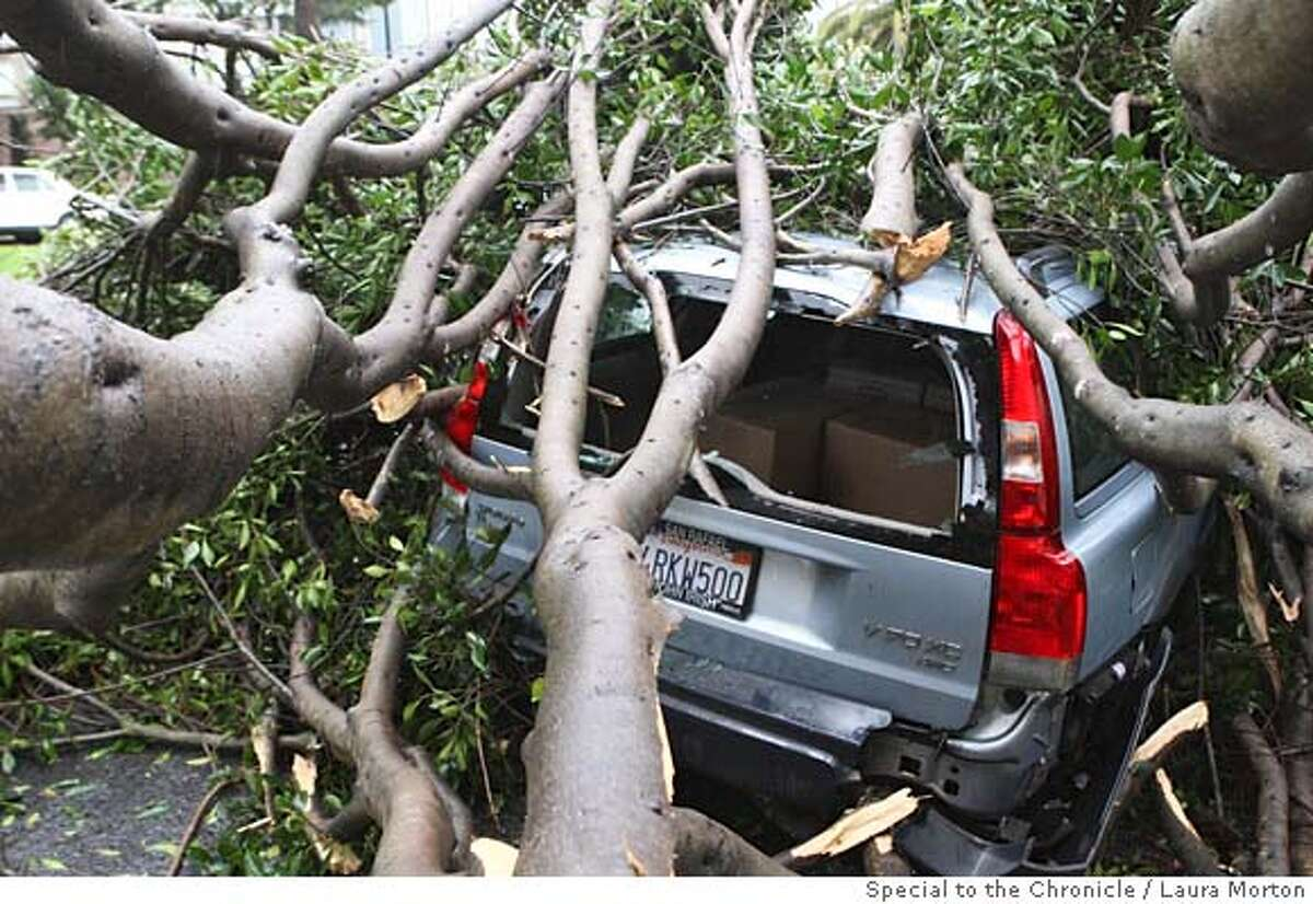 Weather05_SF_0183_LKM.jpg A Volvo parked on Dolores St. was damaged by a large tree that fell on it during the storm on Friday morning. (Laura Morton/Special to the Chronicle)