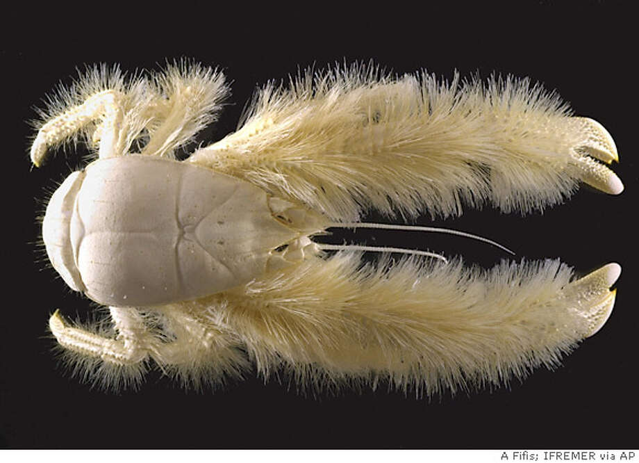 Behold, A Furry Blond Lobster / Pipe down your jaded overfed ...