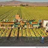 A harvesting machine moves through a field of greens near Salinas, California. (Photo/Scott Anger)
