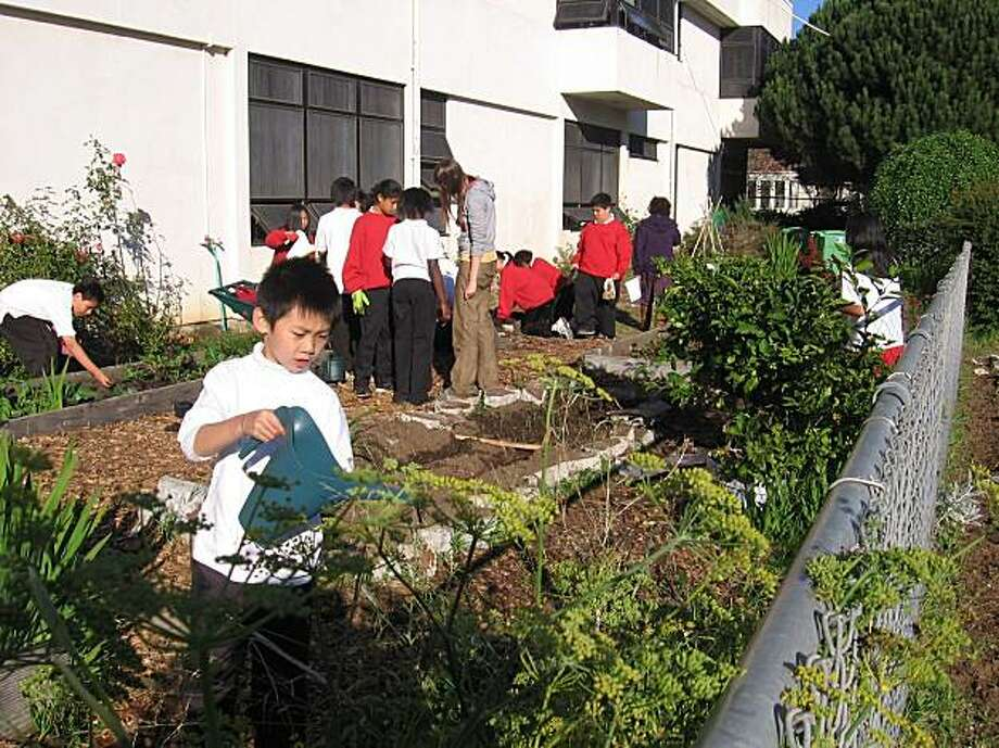 6th grade students at Martin Luther King, Jr. Academic Middle School in  San Francisco weeding and watering in their school garden, which is supported  by Urban Sprouts and the SF Garden Club. Photo: Abby Jaramillo, Urban Sprouts