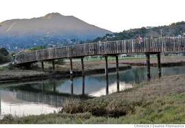 Birds can be seen in adundance at Bothin Marsh in Marin County.