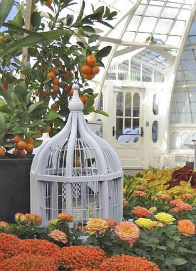 mini conservatory Photo: Nina Sazevich