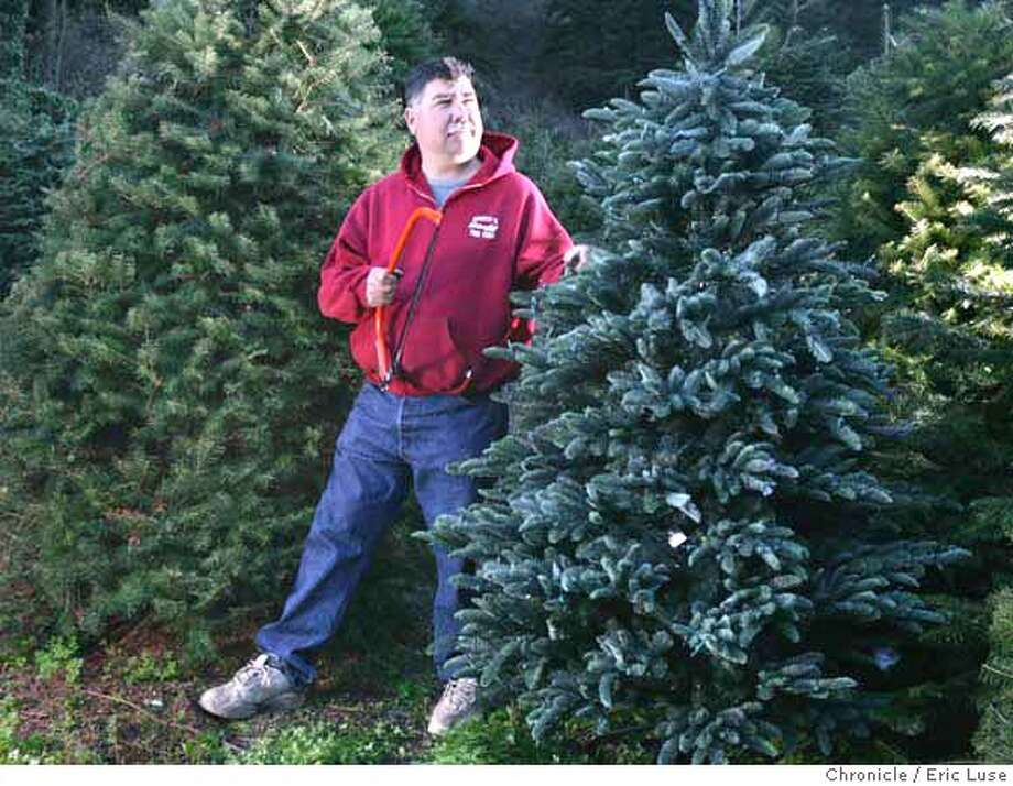 trees28069_el.jpg Dan Sare of Santa's Tree Farm in Half Moon Bay. He is in the Douglas Fir lot and on the right is a BH 6 1/2 foot tall Noble Fir ($779) from Balsam Hill Christmas Tree Company  Eric Luse / The Chronicle Photo taken on 11/21/07, in Half Moon Bay, CA, USA  Names cq from source  Natalie Sare Dan Sare MANDATORY CREDIT FOR PHOTOG AND SAN FRANCISCO CHRONICLE/NO SALES-MAGS OUT Photo: Eric Luse