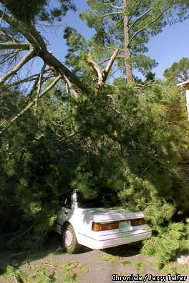 This car was one of three hit by a large tree. Downed trees damaged cars and two houses and knocked out power lines. Chronicle photo by Jerry Telfer