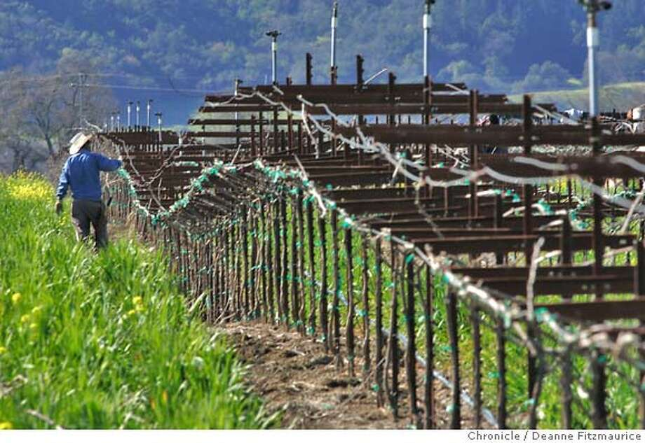 vineyards_095_df.JPG  Workers are pruning the vines. Cover crops are planted between the vines to prevent erosion. Clos Du Bois winery is using techniques to make their winery more eco-friendly.  San Francisco Chronicle photo by Deanne FitzmauriceRan on: 03-21-2006  Clos Du Bois workers have sown cover crops between vine rows, part of the winery's commitment to eco-friendly grape- growing.Ran on: 03-21-2006  Clos Du Bois has cover crops growing between rows of vines.Ran on: 03-21-2006  Clos du Bois workers have sown cover crops between vine rows, part of the winery's commitment to eco-friendly grape- growing. Photo: Deanne Fitzmaurice
