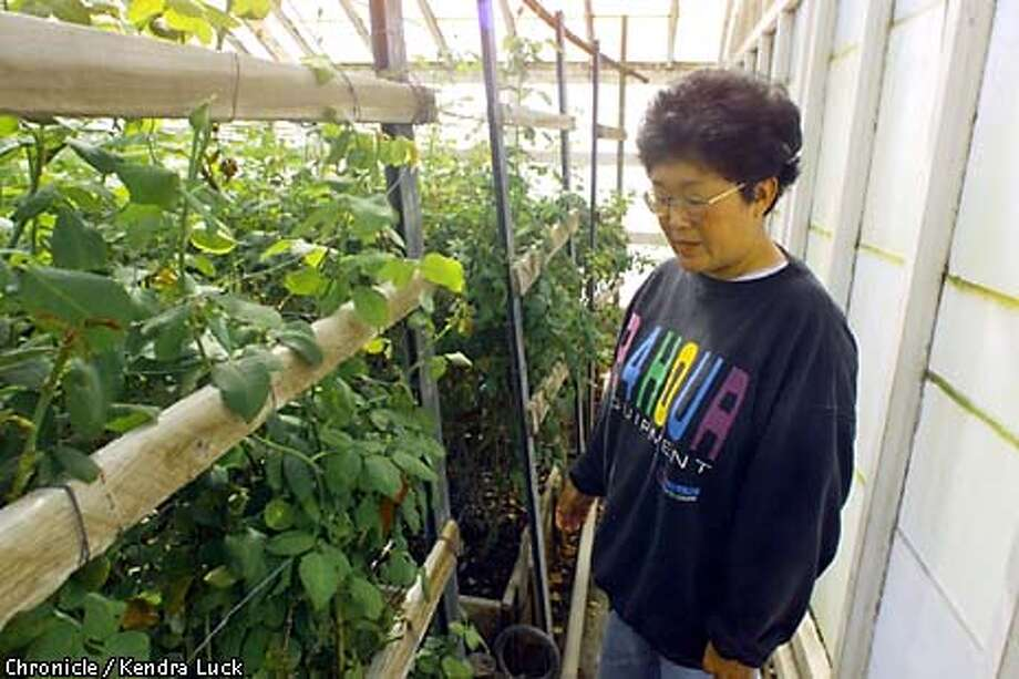 Yokota Nursery is the last in Alameda County to grow and sell roses. Chronicle photo by Kendra Luck