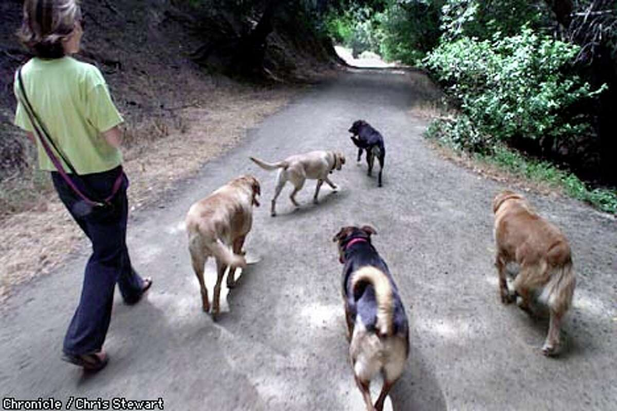 If a plan being considered in Marin County is adopted, Liz Campana would not be allowed to walk more than three dogs at once.
