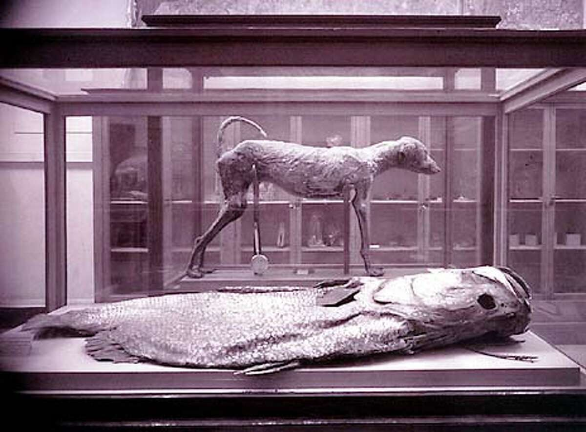 """San Francisco photographer Richard Barnes' """"Mummified Fish"""" is from a series of photographs of animal mummies in the Cairo Museum"""