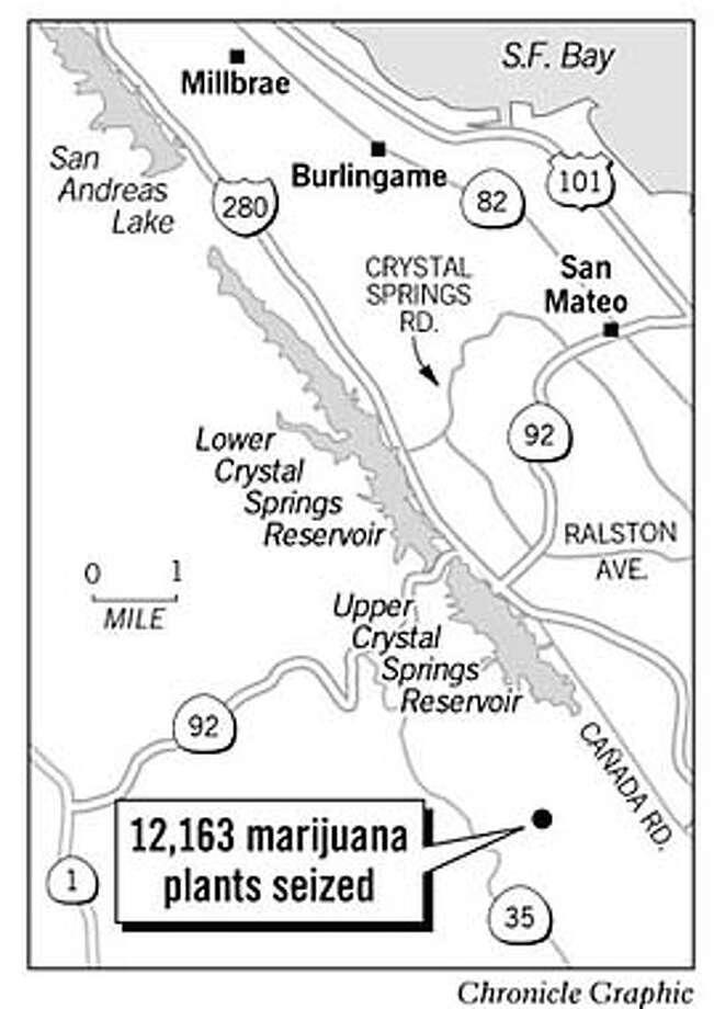 record drug bust near san mateo county reservoir 12 000 marijuana Booking Manager Resume 12 163 marijuna plants seized chronicle graphic