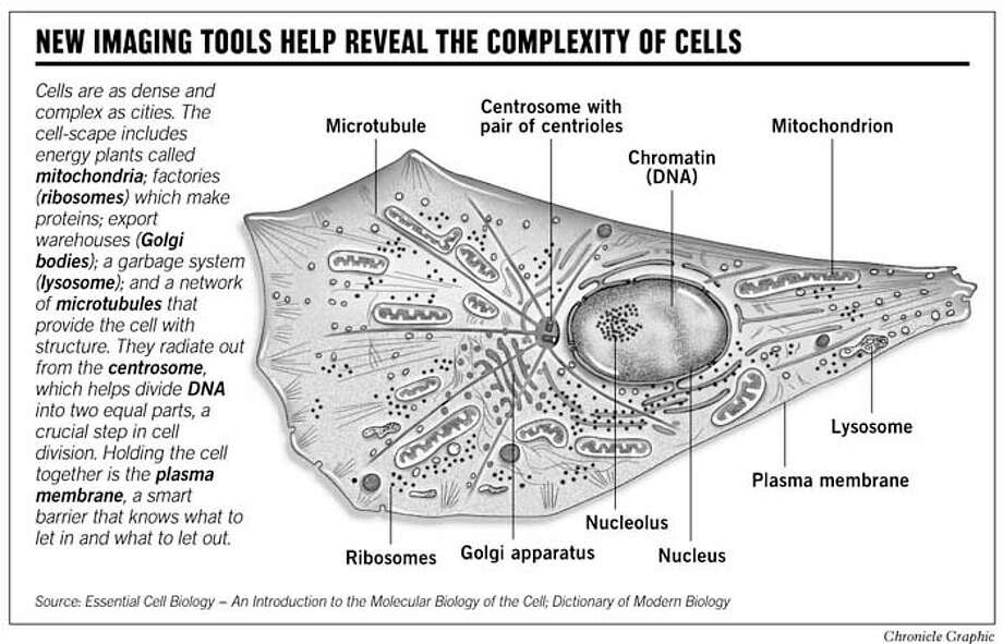 New Imaging Tools Help Reveal the Complexity of Cells. Chronicle Graphic