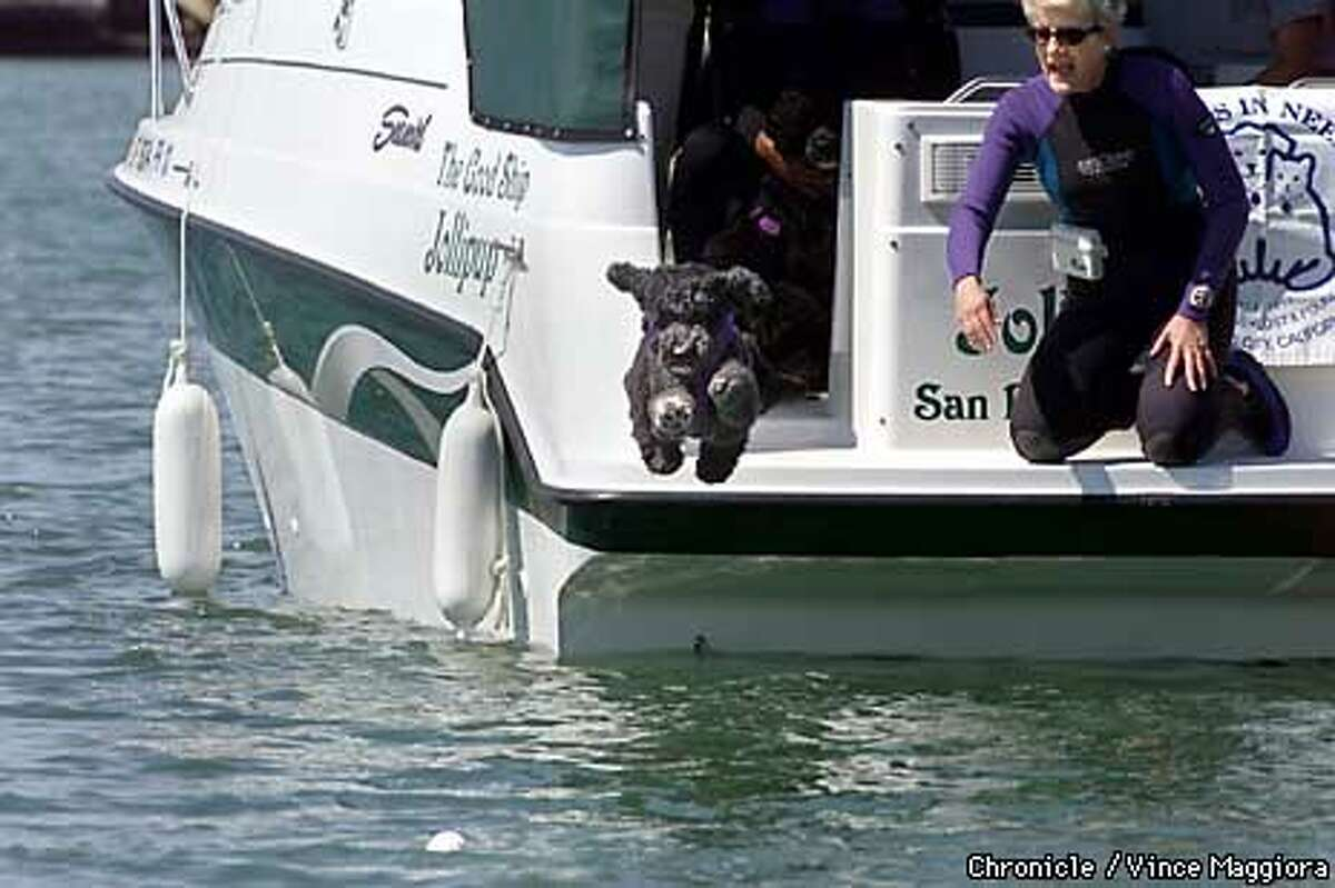 Shadow jumped off a boat to retrieve a baseball thrown by Sue D'Augusta. A dog team will begin performing at Giants games on Saturdays. Chronicle photo by Vince Maggiora