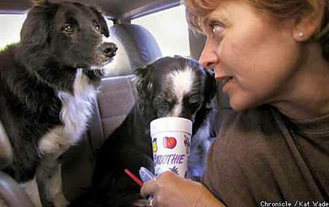 DOGGED PURSUIT / East Bay folks flock to sheepherding to keep their