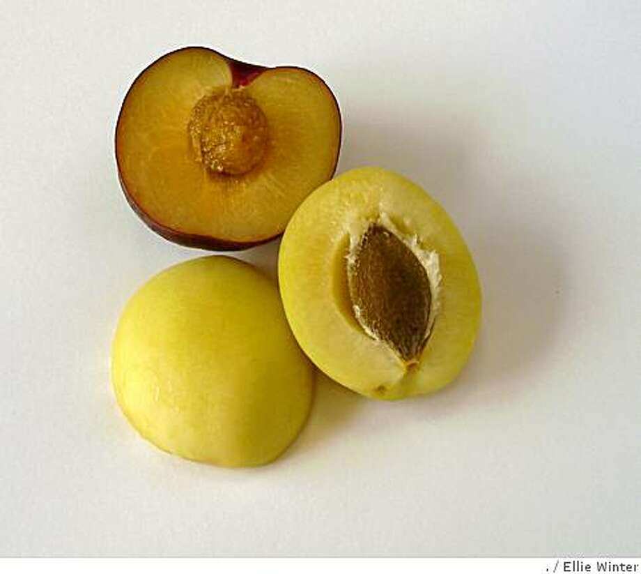 Apricot pits are the source of potentially harmful substances. Photo: ., Ellie Winter