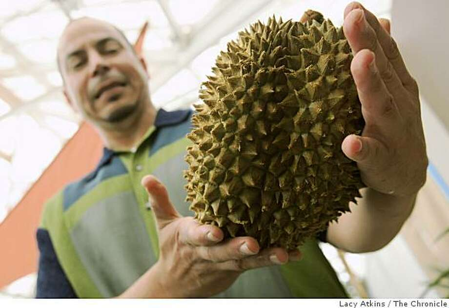 Exhibit manager Mike Gonzalez shows off the Durian fruit which is part of the new addition of  the San Francisco's Conservatory of flowers Edible Expeditions exhibit, Thursday April 30, 2009, in San Francisco, Calif. Photo: Lacy Atkins, The Chronicle