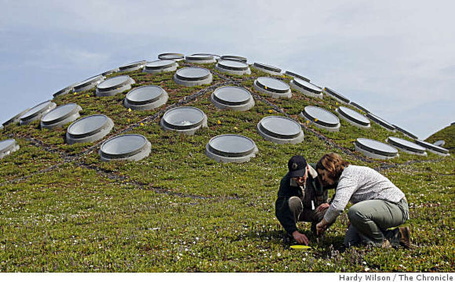 San Francisco State University biology professor John Hafernik, left, and San Francisco State University graduate student Jessica Vandenberg, right, inspect a dish on the top of the Academy of Science building in Golden Gate Park in San Francisco, Calif., on Monday, April 13, 2009. Hafernik and Vandenberg are inspecting the migratory patterns of insects in the area. Photo: Hardy Wilson, The Chronicle