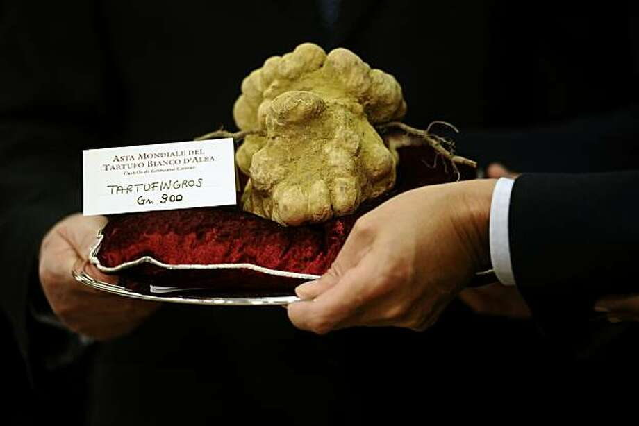"An official presents a 900 grams white truffle with the mother (roots) wich was auctionned for 105 000 euros on November 14, 2010 during the traditionnal annual truffle auction sale in Alba, northern Italy. The Piemonte region, where Alba is located, isconsidered to have the best ""tartufo bianco"" (white truffles) in the world. Photo: Filippo Monteforte, AFP/Getty Images"