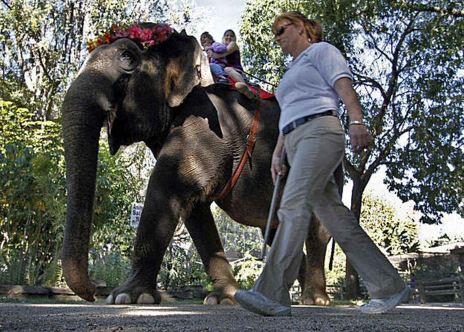 "SANTA ANA, CA. NOV. 13, 2010. Trainer Joanne Smith alongside ""Kitty"" the 8000 lb and 33 yr. old elephant giving rides at the Santa Ana Zoo on Nov. 13, 2010. Dispute over an elephant ride at the Santa Ana Zoo where animal rights people charging the ride is cruel. (Lawrence K. Ho / Los Angeles Times) Photo: Lawrence K. Ho, Los Angeles Times"