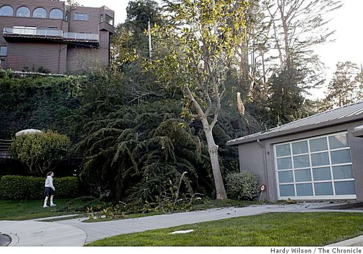 Ciara Silvestri looks at a tree that fell in the yard of 98 Rockaway Street in San Francisco, Calif., on Tuesday, April 14, 2009.