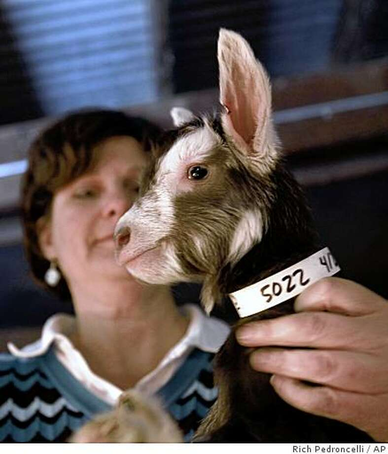 This Friday, April 3, 2009 photo shows Elizabeth Maga, an animal science researcher at the University of California, Davis, holding a day-old genetically altered goat kid at the Davis, Calif., campus. Ten years ago Maga  and fellow researcher James Murray, found a way to transfer a human gene into goats so they produce an enzyme in their milk that fights the bacteria that causes diarrhea.  The new born kid as part of he herd of genetically altered animals.(AP Photo/Rich Pedroncelli) Photo: Rich Pedroncelli, AP
