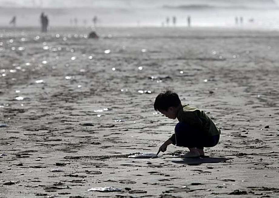 Young Elias Chin of San Francisco investigates one of the jellyfish near Lawton Street at Ocean Beach on Sunday. Photo: Brant Ward, The Chronicle