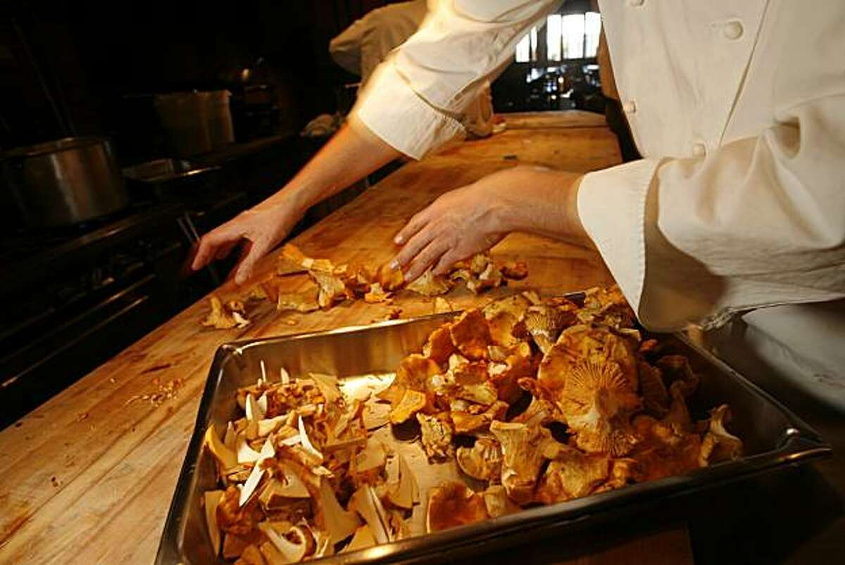 Chanterelles mushrooms are highly prized for their flavor and sturdiness.
