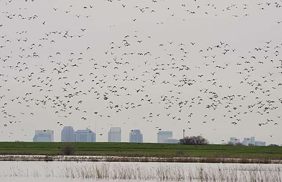 The downtown Sacramento skyline is contrasted by flying birds over the Yolo Bypass on Tuesday, February 2, 2010. The Yolo Bypass is flooded for the first time since 2006 due to high water in the Sacramento River following recent storms. As a result, it's become a vast wetland filled with new-hatched insect blooms feedings schools of native salmon and splittail fish --  and even more waterfowl. The transformation highlights an ongoing debate over a possible broader role for the bypass in restoring the Delta. Photo: Randy Pench, Rpench@sacbee.com