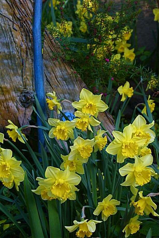 Daffodils with sculpture Photo: Keeyla Meadows