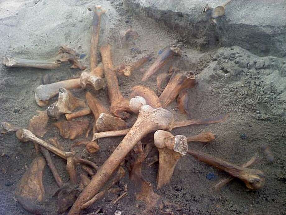 Bones dating from the 19th century found at Fort Mason. Photo: National Park Service
