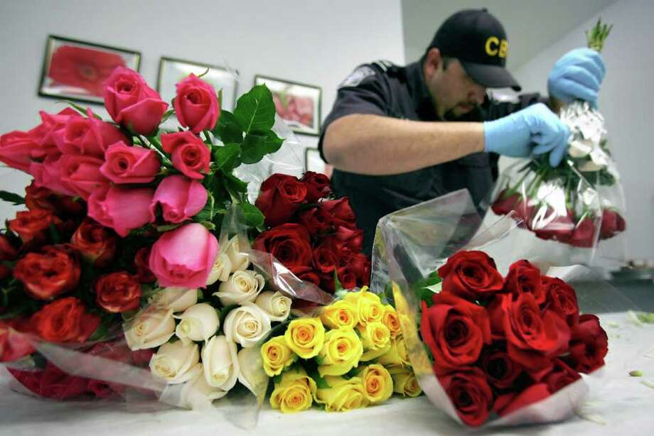 Rudy Lerma, an Agricultural Specialist with U.S. Customs and Border Protection, inspects a sample of roses from a shipment of flowers from Mexico, one of the last trucks to enter the U.S. at the Colombia Solidarity Trade Bridge in Laredo, before Valentine's Day, Friday, Feb. 10, 2012.  Bob Owen/San Antonio Express-News Photo: Bob Owen, San Antonio Express-News / © 2012 San Antonio Express-News