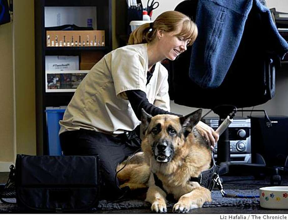 Cato gets laser therapy with Krista Niebaum, director of rehabilitation therapy at Scout's House in Menlo Park, California,  on Monday, February 23, 2009. Photo: Liz Hafalia, The Chronicle