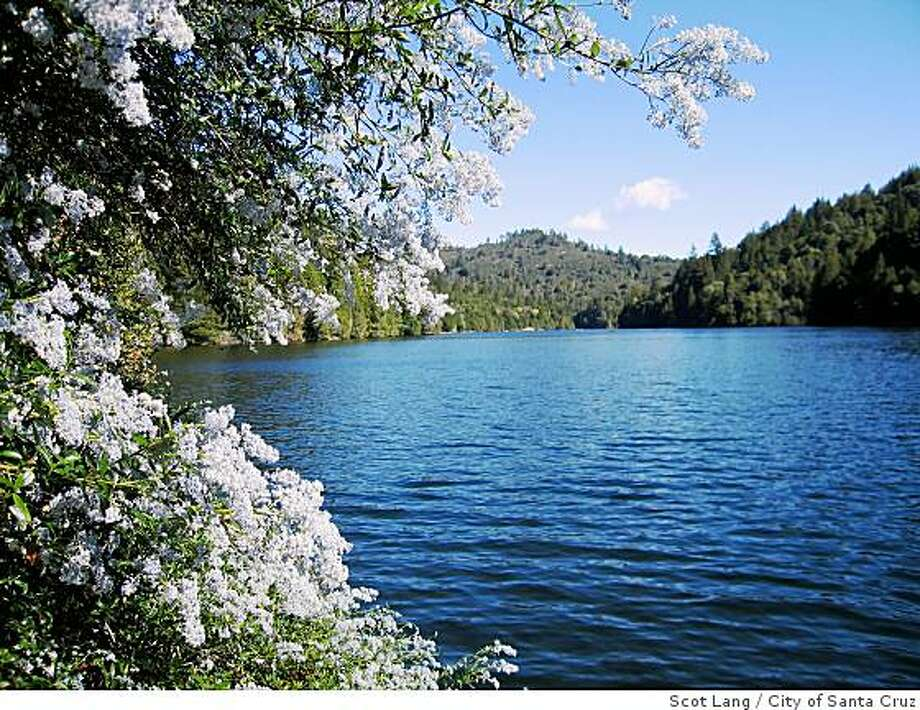 Wild lilac (Ceonothus) will be blooming into May at Loch Lomond in the Santa Cruz mountains. Photograph was shot in March from a boat near the lake's west bank. Photo: Scot Lang, City Of Santa Cruz