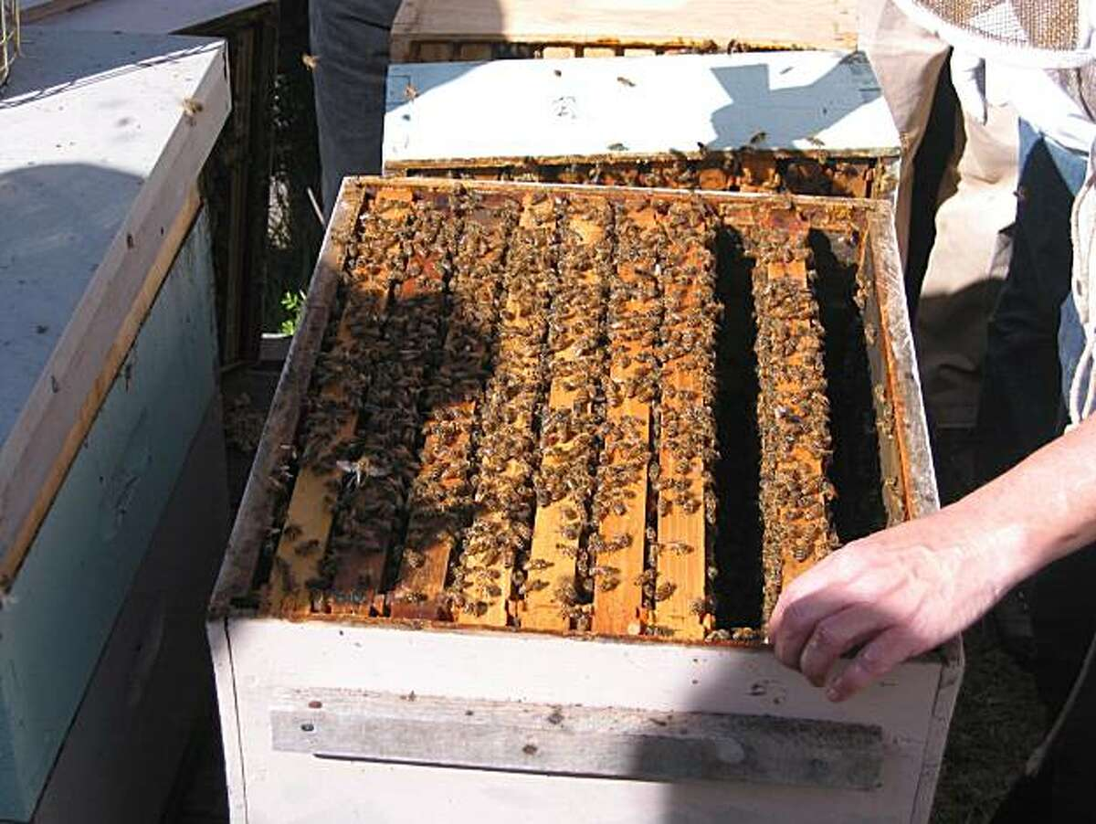 Doug Vincent at Beekind shows his classes how to maintain beehinves.