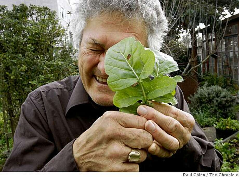 "Bob Schildgen, aka Mr. Green, inspects some arugula in his backyard garden in Berkeley, Calif., on Friday, Feb. 6, 2009. Schildgen writes Sierra Magazine's popular ""Hey, Mr. Green"" environmental advice column. Photo: Paul Chinn, The Chronicle"