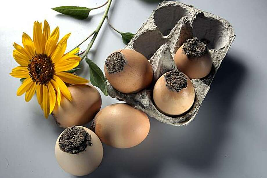 Seed balls in an eggshell in San Francisco, Calif.,  on Thursday, September 30, 2010. Photo: Liz Hafalia, The Chronicle